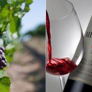 Κόκκινο κρασί από παραδοσιακές ποικιλίες της Βουργουνδίας και του Μπορντό του οινοποιείου Meerlust