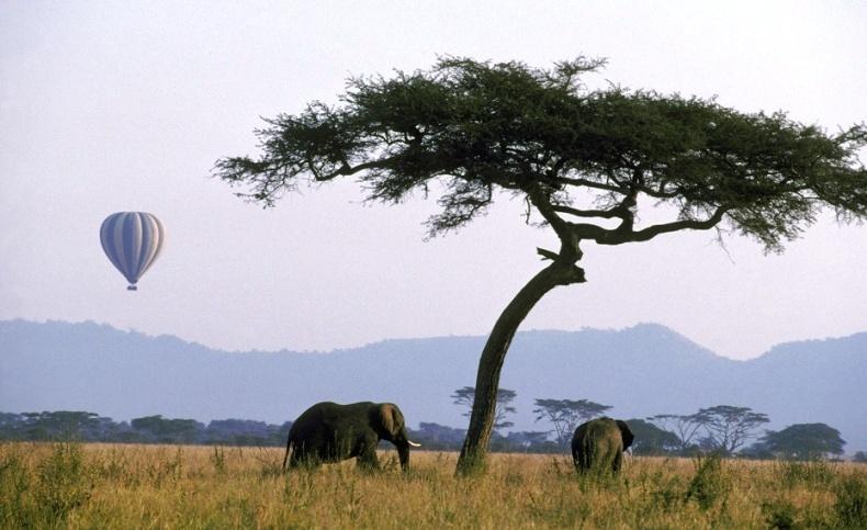 Σερενγκέτι, Τανζανία: Η άγρια ζωή εκτυλίσσεται κάτω από τα πόδια σας