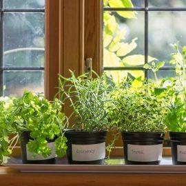 Διακοσμήστε την κουζίνα σας με αρωματικά βότανα