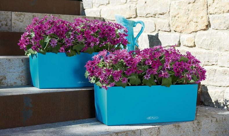 Αν αγαπάτε τα trendy χρώματα χαρίστε στους εξωτερικούς σας χώρους αλλά και στα περβάζια σας τέλειες συνθέσεις με τα αγαπημένα σας λουλούδια