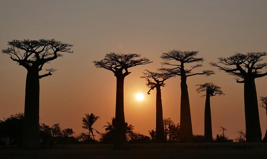 Ταξίδι στη Μαδαγασκάρη, λοιπόν, και ο λόγος συναισθηματικός