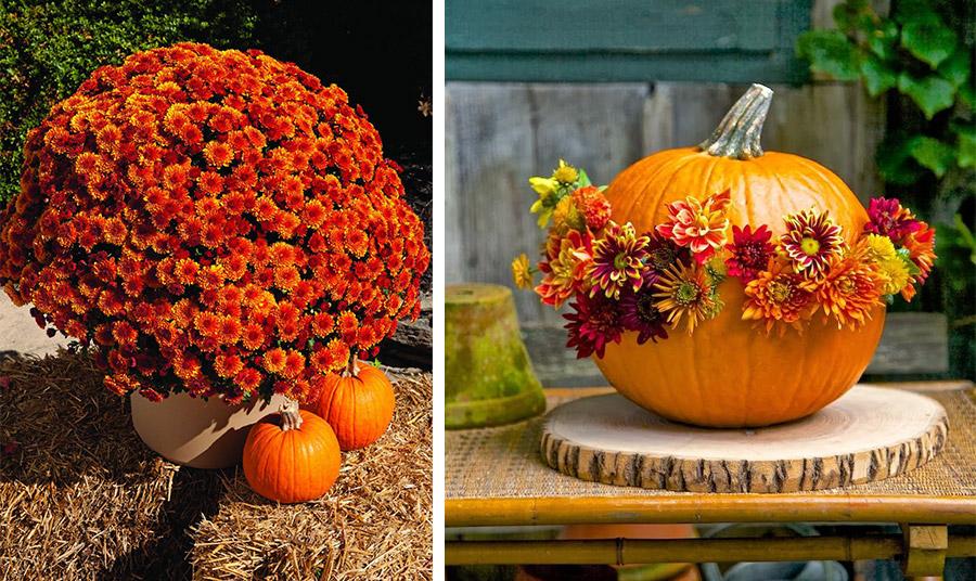 Τα χρυσάνθεμα σε «φλογερό» πορτοκαλί είναι χαρίζουν χρώμα στον κήπο ή στο μπαλκόνι μας ή γίνονται διακοσμητικό στοιχείο με την κολοκύθα που επίσης συμβολίζει τη φθινοπωρινή εποχή!
