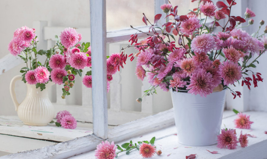 Ελεγεία σε μοβ-ροζ! Φυτεύστε τα σε μία γλάστρα ή στολίστε μία κανάτα σε λευκό χρώμα για την τέλεια αντίθεση και στολίστε ένα παράθυρό σας
