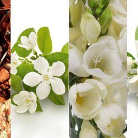 Οι ανάλαφρες υφές της νέας σειράς Crème Fraîche® de Beauté αποπνέουν ένα υπέροχο άρωμα: Με νότες φρέζιας και νεραντζιάς σε μία καρδιά από άνθη πορτοκαλιάς και γιασεμιού που ολοκληρώνεται με νότες από ξύλο κέδρου!