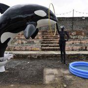 Ένα εικαστικό σχόλιο πάνω στις συνθήκες, κάτω από τις οποίες κρατούνται και εκτελούν τα show τους τα ζώα στο αμερικανικό SeaWorld