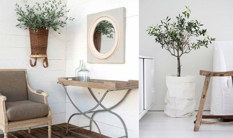 Μικρή ελιά στολίζει τον τοίχο σε μία γωνιά καθιστικού // Χρησιμοποιήστε ένα υφασμάτινο ή χάρτινο κασπό γύρω από τη γλάστρα σε ένα μίνιμαλ χώρο και δώστε μία πινελιά χρώματος