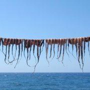 Μία από τις χαρακτηριστικές εικόνες του ελληνικού καλοκαιριού. Τα χταπόδια κρεμασμένα να λιάζονται σε νησιωτικό σκηνικό και στη συνέχεια πάνω στα κάρβουνα και σερβίρισμα με λάδι και λεμόνι