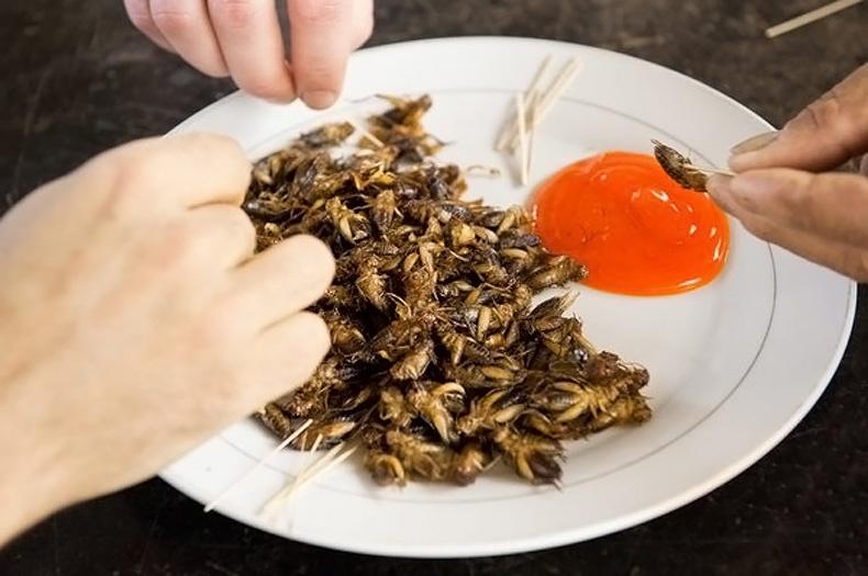 Νέα τάση: Τα έντομα