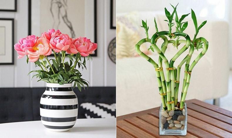 Τα αποξηραμένα φυτά δεν εκπέμπουν καθόλου καλή ενέργεια, οπότε προτιμήστε μόνο τα φρέσκα λουλούδια και φυτά // Ένα από τα ευοίωνα φυτά είναι το μπαμπού