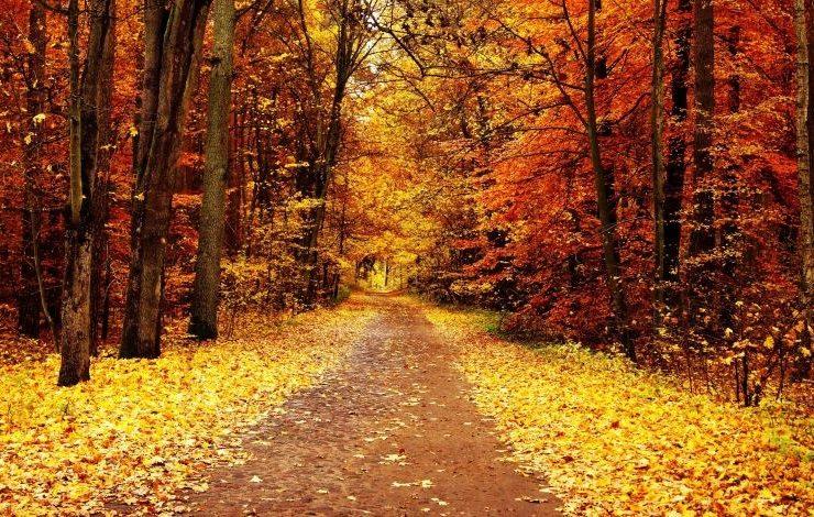 Ακολουθήστε... τα φύλλα του φθινοπώρου!