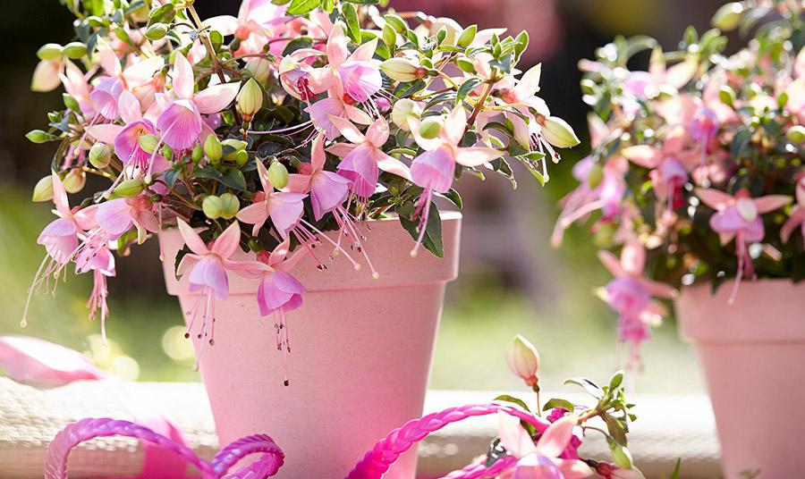 Φούξια: Τα πιο όμορφα κρεμαστά λουλουδάτα σκουλαρίκια!
