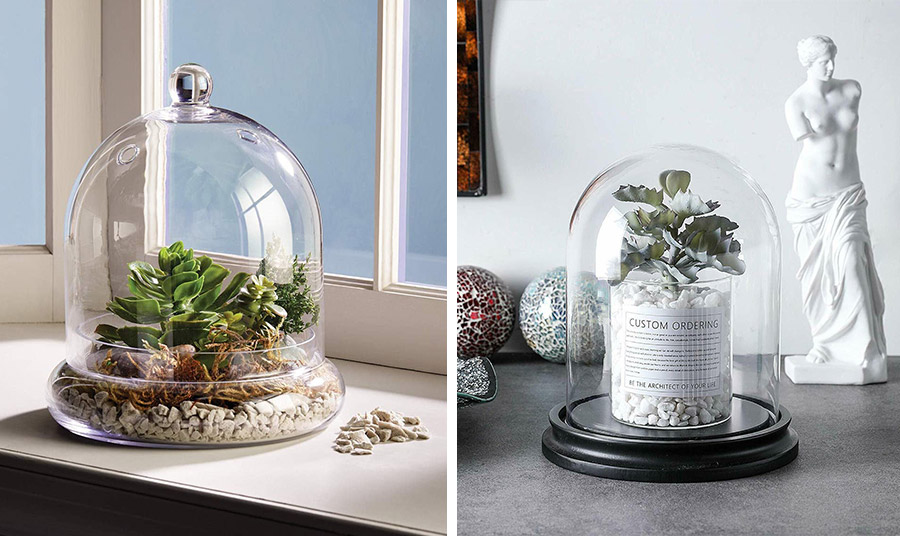 Μία γυάλινη καμπάνα θα διατηρήσει την απαραίτητη υγρασία στο φυτό σας