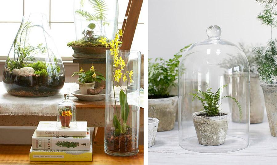 Φροντίστε να τοποθετήσετε τα φυτά σας σε σημείο με έμμεσο φως, για να μην καούν! Το γυάλινο προστατευτικό αυξάνει τη θερμοκρασία, αν οι ακτίνες του ήλιου πέφτουν επάνω του