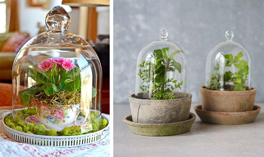 Η γυάλινη καμπάνα είναι ιδανική κυρίως για τα τροπικά φυτά εσωτερικού χώρου που έχουν μεγαλύτερη ανάγκη για υγρασία