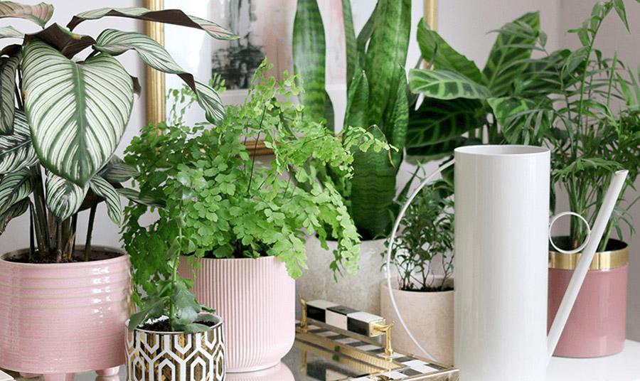 Φυτά εσωτερικού χώρου: Προετοιμάστε τα… για το φθινόπωρο