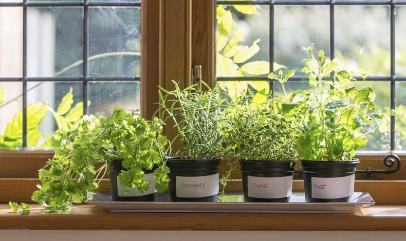 Τι θα απογίνουν τα φυτά μας στις διακοπές;