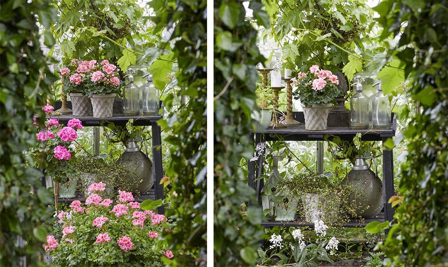 Μία όαση καλοκαιρινής μαγείας! Φυτέψτε γεράνια στα χρώματα που αγαπάμε για έναν ολάνθιστο και καταπράσινο κήπο!