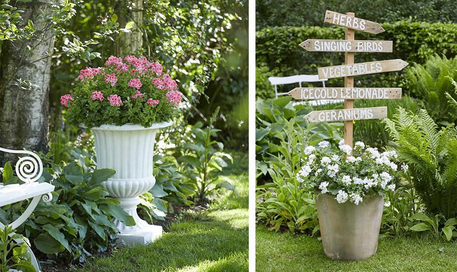 Χρησιμοποιήστε διάφορες μεγάλες γλάστρες για να φυτέψετε τα γεράνια σας και τοποθετήσετε τις σε διαφορετικά σημεία του κήπου σας
