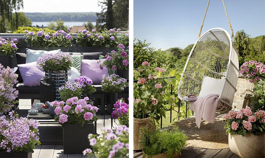 Μία βεράντα ή ταράτσα «τυλιγμένη» στα μοβ! // Μία αιώρα από μπαμπού, κασπό από ψάθα και καλάμια, ένα ρατάν χαλί και υπέροχα μοβ και ροζ γεράνια σας επιτρέπουν στιγμές ονειροπόλησης
