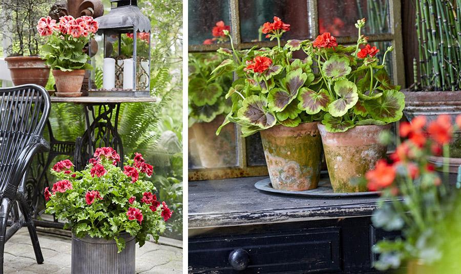 Ο συνδυασμός των πράσινων και των ανθισμένων φυτών, τα ψάθινα έπιπλα και τα αξεσουάρ προσδίδουν ένα χαλαρωτικό έθνικ στιλ // Με τα έντονα κόκκινα και πορτοκαλί άνθη, τα εντυπωσιακά γεράνια δημιουργούν γοητευτικές αντιθέσεις