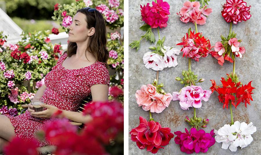 Τα γεράνια είναι ένα άκρως καλοκαιρινό λουλούδι συνδεδεμένο με τις αυλές και τα παράθυρα στο ελληνικό τοπίο!