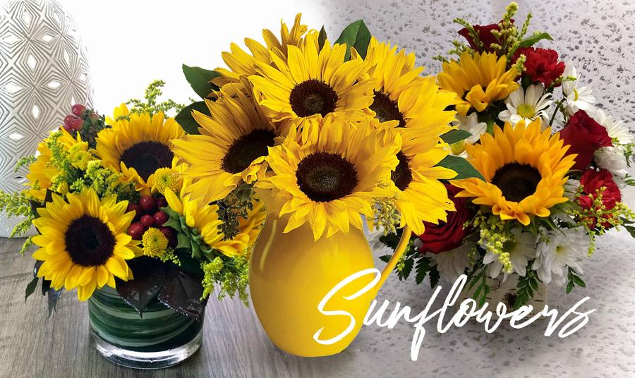 Ηλίανθος: Το λουλούδι του καλοκαιριού και του ήλιου!