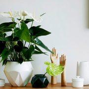 Καθαρή ατμόσφαιρα στους εσωτερικούς χώρους με τη δύναμη των φυτών!