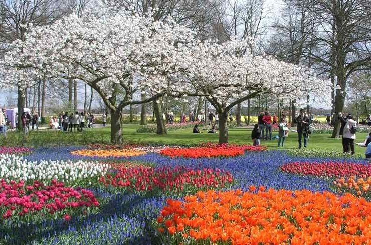 Keukenhof: Ο πιο λουλουδένιος κήπος στον κόσμο