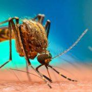 Φλόριντα: Θα απελευθερώσουν 750 εκατομμύρια γενετικά τροποποιημένα κουνούπια