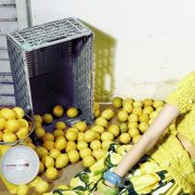 Λεμόνι: Για λαμπερή και φρέσκια επιδερμίδα
