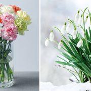 Γαρίφαλα και χιονοσταλίδες για τον πρώτο μήνα του χρόνου, που αντιπροσωπεύουν τα πρώτα την καθαρή αγάπη και την καλή τύχη και τα δεύτερα την ελπίδα, την αναγέννηση και την αγνότητα
