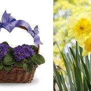 Ο Φεβρουάριος με τις πρίμουλες και τις βιολέτες είναι φουλ του ρομαντισμού! // Οι νάρκισσοι είναι τα λουλούδια του πρώτου μήνα της άνοιξης και ταυτίζονται με τη δημιουργικότητα, τη ζωτικότητα και την έμπνευση!