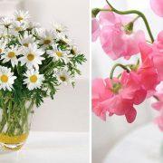 Απρίλιος: Τα μοσχομπίζελα συνδέονται με την εύθραυστη ευτυχία, την ευγνωμοσύνη, ενώ οι μαργαρίτες με τη νεότητα, την αγνότητα και την αθωότητα