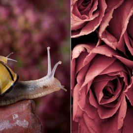 Το πλάνο των σαλιγκαριών πάνω στον Μarsala βράχο από τη φωτογράφο Nailia Schwarz // Στην ίδια απόχρωση και ένα μπουκέτο τριαντάφυλλα