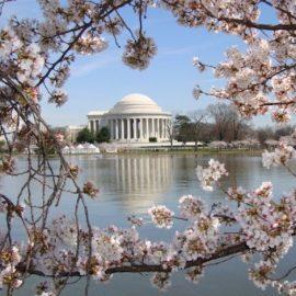 Φέτος, οι κερασιές θα ανθίσουν στην Ουάσιγκτον από τις 20 Μαρτίου έως τις 12 Απριλίου