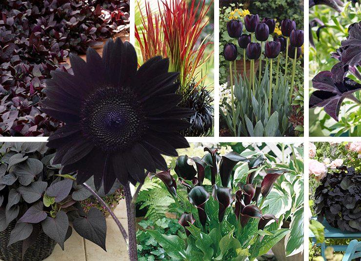 «Σκοτεινός» κήπος: Η ασύγκριτη γοητεία για όσους λατρεύουν… το μαύρο!