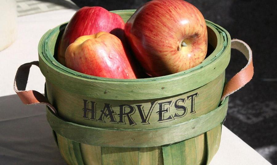 Μήλα: Φάτε τα διαφορετικά και μειώστε τη χοληστερόλη!