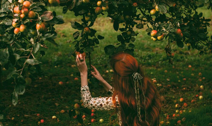Στις μυθολογίες πολλών λαών το μήλο είναι σύμβολο αιώνιας νιότης και ομορφιάς, νιότης και αθανασίας