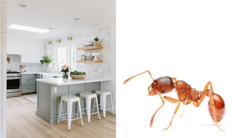 Απαλλαγείτε από τα μυρμήγκια στην κουζίνα χωρίς χημικά!