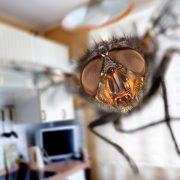 Μύγες: Υπάρχει τρόπος να απαλλαγούμε;