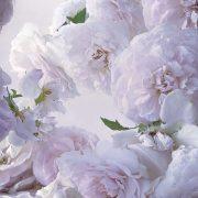 Nick Knight: Η συγκλονιστική έκθεση «Roses from my Garden» και οι συμβολισμοί του τριαντάφυλλου