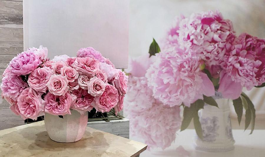 Ένα από τα πιο ωραία χρώματα παιώνιες είναι το ροζ. Ένα εντυπωσιακό μπουκέτο θα στολίσει οποιαδήποτε γωνιά του σπιτιού