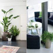 «Πλημμυρίστε» ένα μοντέρνο χώρο, τόσο γραφείου όσο και καθιστικού, με πράσινα φυτά για να δώσετε μία ευχάριστη αίσθηση. Διαλέξτε ανάμεσα στη μεγάλη ποικιλία της σειράς CLASSICO Color ή CUBICO σε διαφορετικά μεγέθη και χρώματα ζωντανεύει τους χώρους.