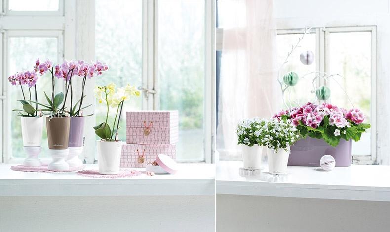 Ρομαντικές στιγμές? συνδυάστε το μοβ με λευκό και ουδέτερο καφέ (υπάρχει και γκρι, κόκκινο, γαλάζιο) από τις επιτραπέζιες γλάστρες LECHUZA και δώστε νέα διάσταση στην κρεβατοκάμαρα ή το καθημερινό σας δωμάτιο