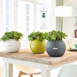 Διακοσμήστε με ζωηρά χρώματα την κουζίνα σας. Οι γλάστρες LECHUZA θα σας δώσουν τέλειες επιλογές