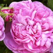 Μειώστε τις λεπτές γραμμές με τα αγαπημένα σας λουλούδια!