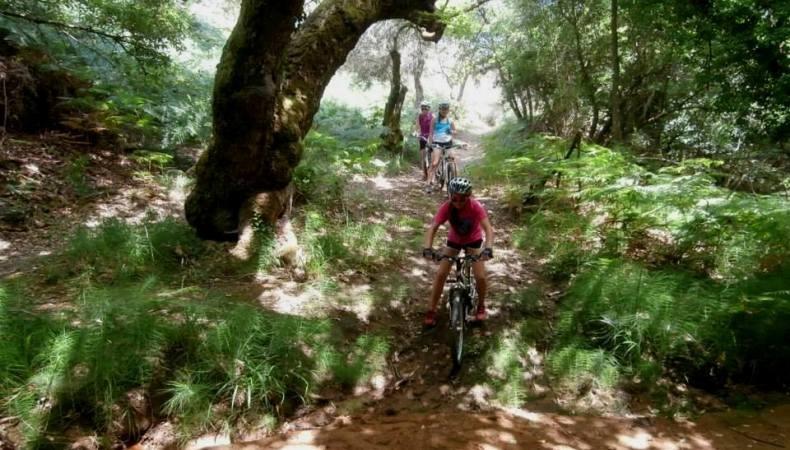 Ποδηλατάδα στο καταπράσινο τοπίο της Σκιάθου