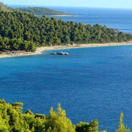 Η παραλία Μηλιά με τα πεύκα να φτάνουν ως τη θάλασσα…