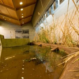 Η χλωρίδα και η πανίδα της Λίμνης Στυμφαλίας «κλεισμένη» στο μουσείο, τονώνει την οικολογική μας ευαισθησία