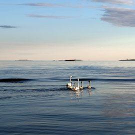 Το τοπίο του νησιού που θα έχει ολιστική προσέγγιση με μαθήματα γιόγκα, διαλογισμού και γενικότερης άθλησης, αλλά και μαθήματα υγιεινής μαγειρικής